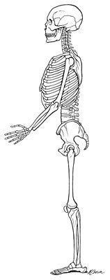 alinhamento ideal do esqueleto.